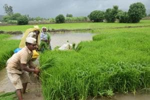 Climate change may cut farm income by 20-25%: Economic Survey