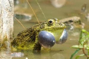 At least 412 amphibian species are found in the country and some of them are on the verge of extinction.