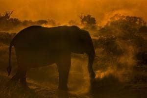 Photos: Aditya Singh's photo exhibit brings the forests to a...