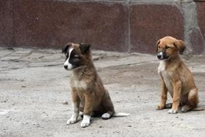 Seven persons booked for beating puppy to death in Thane