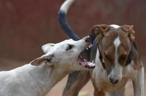 Villagers near Mumbai kill dog after it attacks two-year-old boy