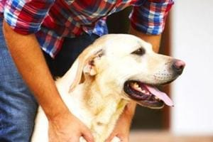 Stay calm. Anxiety in men makes them more prone to dog bites