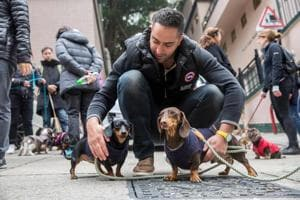 The long and the short: Hong Kong's sausage dogs go walkies
