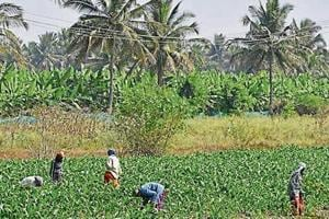 Karnataka's farmers want the Supreme Court to protect their interests as they believe that the Centre and Cauvery Water Disputes Tribunal are 'against them'.