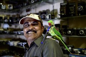 Photos: Meet the Birdman of Chennai who feeds thousand of parakeets...