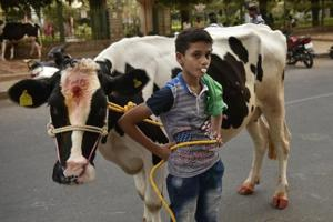 Aadhaar-like tags for cows: Does govt's intent match ground realities?