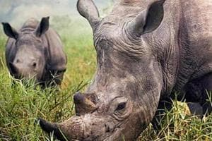 Representational image. Jaldapara and Gorumara are two national parks in north Bengal where rhinos are found.