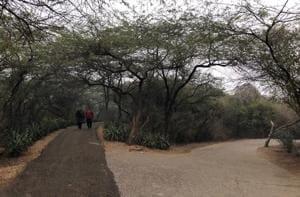 Delhiwale: Into the wild