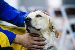 Labrador rescues survivor in Taiwan quake wreckage, hailed as hero on...