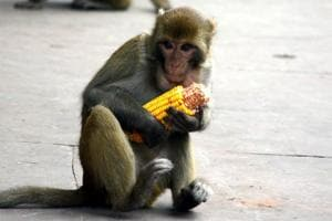 Himachal Pradesh government had asked the Central government to declare monkeys as vermin in 57 most affected tehsils in the state.
