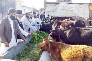 To teach cattle protection, madrasa sets up cowshed