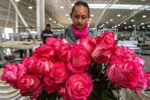 Photos: Valentine's Day a rosy opportunity for unemployed...