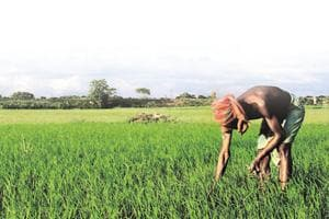 Dalit farmers may fail to benefit from agricultural sops announced by...