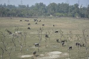 Ghaziabad's forest cover 'increases' in report; state officials...