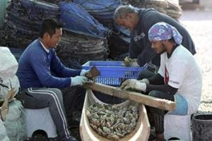 Photos: Fresh twist for UAE diners as oysters take to local waters