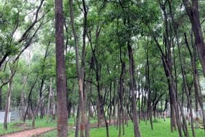 Green cover at Morhabadi in Ranchi