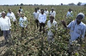 Fear factor crushes farm hopes in Maharashtra