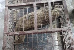 Parts of wild animals sold as immunity boosters, seized in Haridwar
