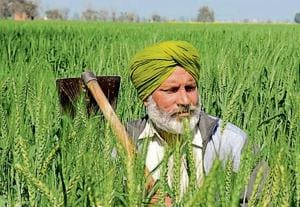 Farmers are given this subsidy to maintain crop quality during the rabi and kharif seasons every year.