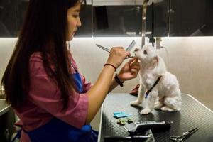 Year of the Dog: Hong Kong dogs have it good with milk baths, oxygen...