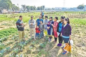 Their owners-- mostly professionals from Gurgaon-- are toiling in the field they have taken on lease for community organic farming. Some are weeding, some sowing seeds, and others are plucking vegetables