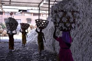In Maharashtra, vicious cycle of cotton farmers' woes continues
