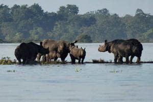 Forest guards in Assam get modern weapons to check rhino poaching