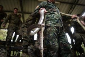 Marines drink cobra blood, eat scorpions in US-Thai war drills