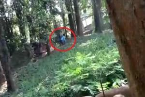 Kerala man jumps into lion enclosure to 'have a chat', rescued