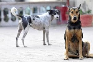 Representational picture. Stray dogs have become a menace in the campus of Lady Brabourne College campus, principal Siuli Sarkar said earlier.