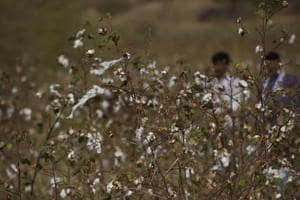 Bad news for Maharashtra's farmers: Hailstorms expected in five...