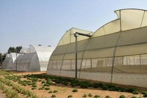 Hi-tech farming: Can Rajasthan make the desert bloom?
