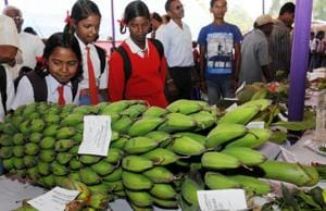 West Bengal firm eyes Bihar to tap banana production