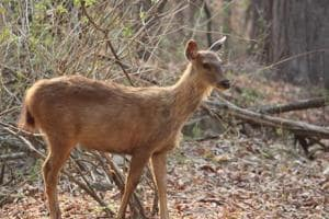 States on alert after eight animals die in Punjab of foot-and-mouth...