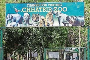 Since January, Chhatbir zoo has lost eight animals, including a blackbuck, a chowsingha, a mouse deer and a bison, to the viral disease that has spread in Chhat and Gager villages too.