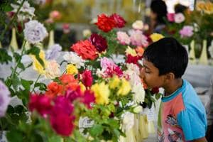 Puneites lighten spirit of 101 Rose show