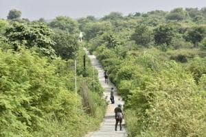 Are biodiversity parks helping the city's environment? Delhi...