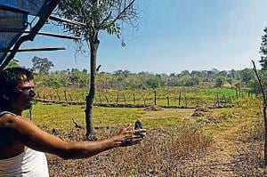 Save Aarey: Tribals of city's green-lungs see red over projects