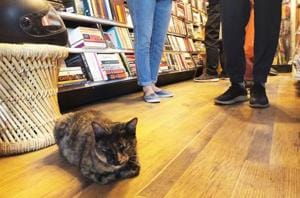 Delhiwale: The cat in the bookstore