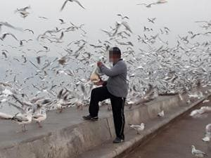 A man feeds the seagulls at Marine Drive.