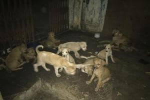 A picture of the puppies taken a day before they were killed.