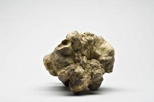 A refreshing change: Forget Italy, your next high-end truffle is...
