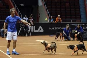 """Ball Dogs"" are one of the highlights of the Brazil Open tennis 2018"