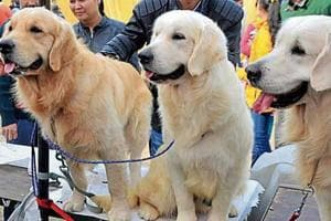 Out of 15,000 pet dogs in city, only 6,300 have been registered by their owners in eight years.
