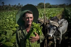 Photos: The faces behind Cuba's famed cigars