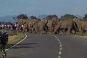 Bengal: Railways to play buzz of honeybees to keep elephants away from...