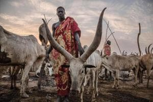 Photos: Inside a Dinka pastoral camp with the cattle grazers of South...