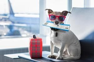 Planning a trip with your pet? Here are the dos and don'ts to make...