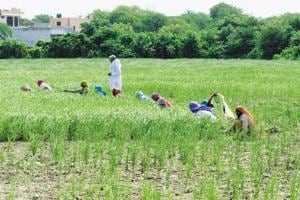NCP asks Maharashtra government to share irrigation data since 2014