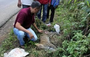 Infra projects around Mumbai's national park to get nod if they build...